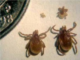 tick treatment