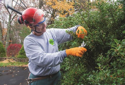 master shrub pruning