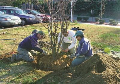Veterans Hospital | West Roxbury, MA Tree Planting Case Study